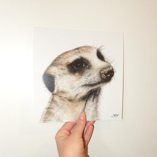 Jessy Megan print portrait animal Suricate