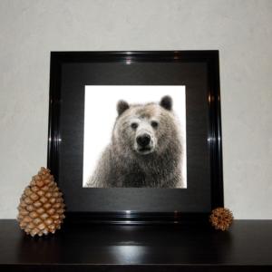 Jessy Megan print portrait animal Ours cadre