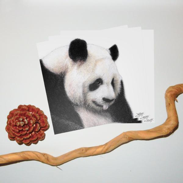 Jessy Megan portrait animal panda triple