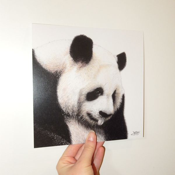 Jessy Megan portrait animal Panda