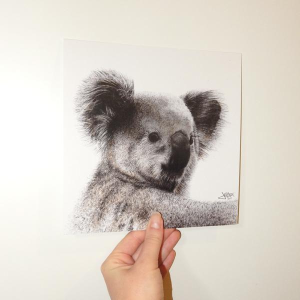 Jessy Megan portrait animal Koala